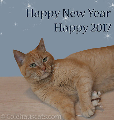 Happy New Year from Colehaus Cats - © Colehauscats.com