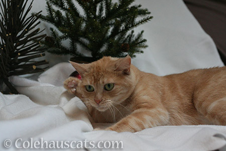 Miss Newton's whapping good Christmas - © Colehauscats.com