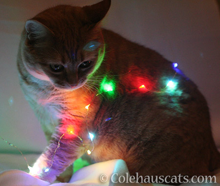 Patrol Sergeant Zuzu inspects our mini lights for compliance - ©