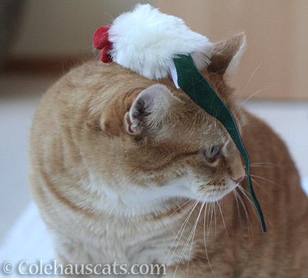Zuzu's mousie - © Colehauscats.com
