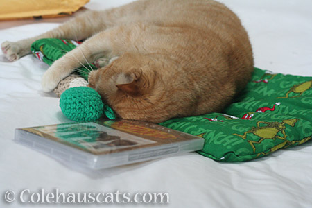 Going for the crocheted drumstick - © Colehauscats.com