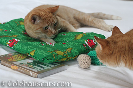 These gifts need inspecting! - © Colehauscats.com