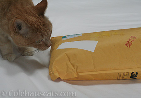 A package! - © Colehauscats.com