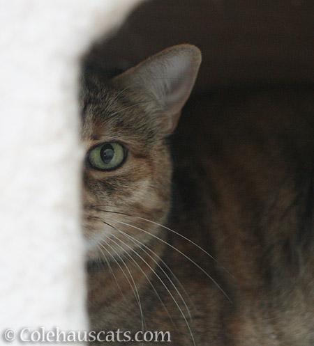 I see you - © Colehauscats.com