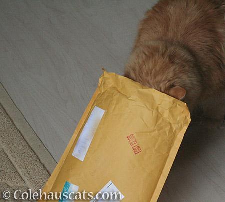 Meanwhile... - © Colehauscats.com