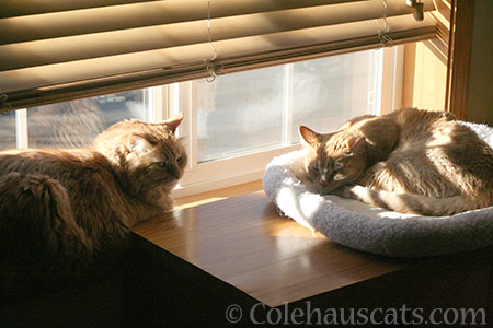Pia and Sunny sunning - © Colehauscats.com