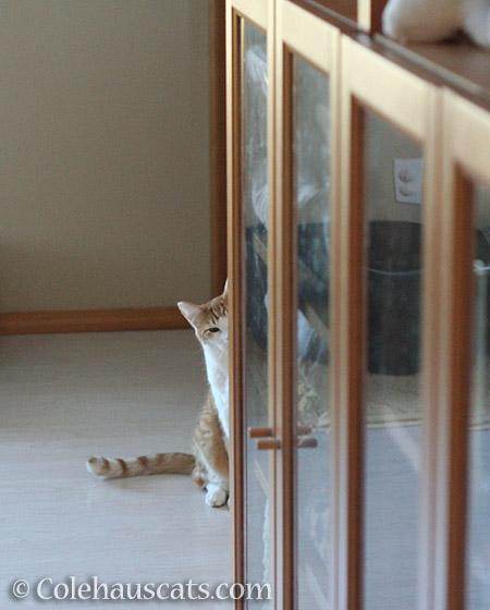 I see you, too - © Colehauscats.com
