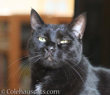 Olivia says... - © Colehauscats.com
