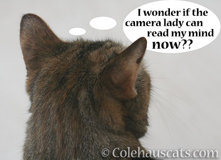 Pretty Ruby Roo wonders - © Colehauscats.com