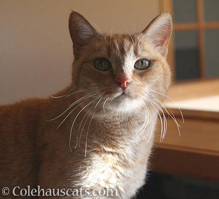Sunny Sunny - © Colehauscats.com