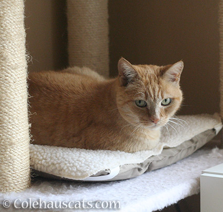 Another of Sunny's favorite napping spots - © Colehauscats.com