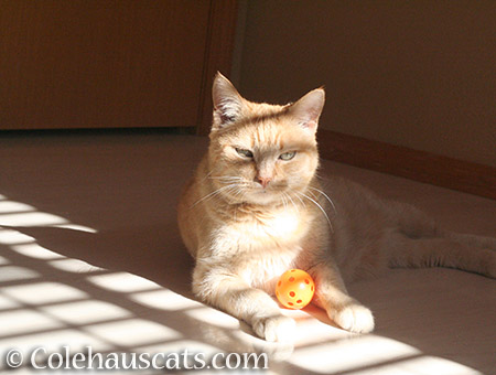 Sunny and her orange orb - © Colehauscats.com
