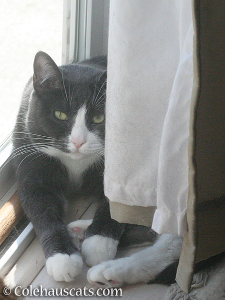 I see you, too, too - © Colehauscats.com