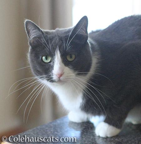 Tessa says - © Colehauscats.com