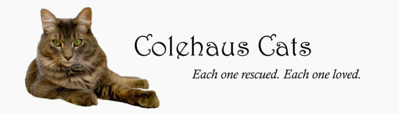 Original Colehaus Cats blog header with angel Cameron - © Colehauscats.com