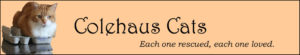 Original Colehaus Cats blog header featuring angel Seth - © Colehauscats.com