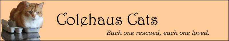 Original Colehaus Cats blog header featuring angel Seth - © Colehauscats.com
