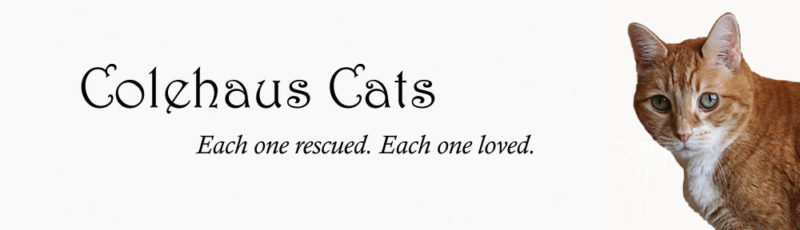 Original Colehaus Cats blog header featuring angel Zooot - © Colehauscats.com