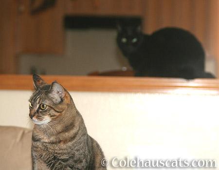Hmmm - © Colehauscats.com