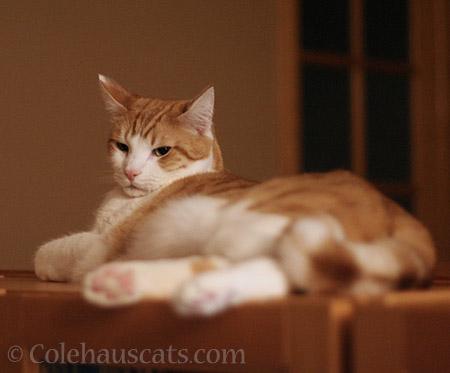 Grumpy Quint - © Colehauscats.com