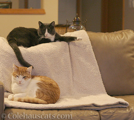 Quint and Tessa - © Colehauscats.com