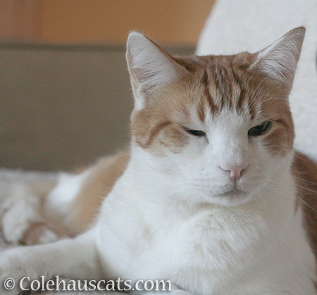 Quint's not worried - © Colehauscats.com