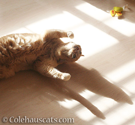Comfortable with being silly - © Colehauscats.com