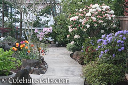 Our east side backyard - © Colehauscats.com