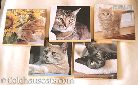 Colehaus Cats photo boards - © Colehauscats.com