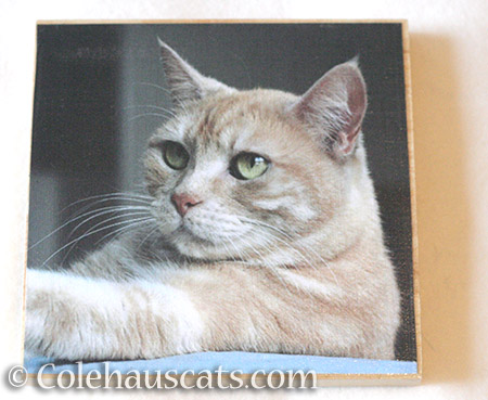 Miss Newton photo board - © Colehauscats.com