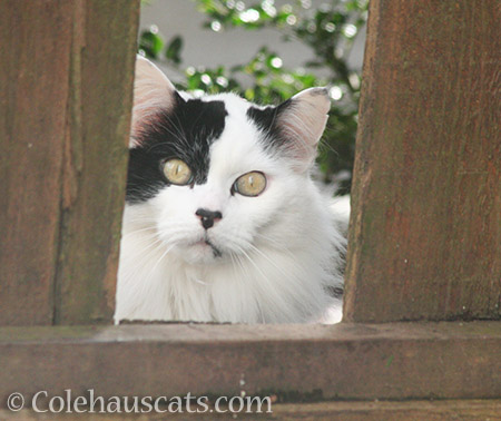 Someone new close up - © Colehauscats.com
