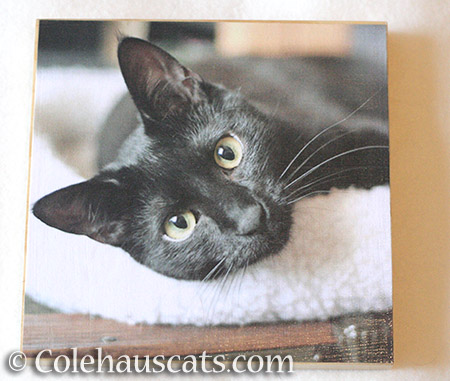 Sweet Olivia photo board - © Colehauscats.com