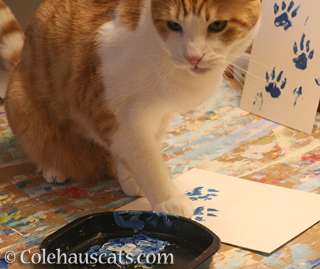 Quint is painting - © Colehauscats.com
