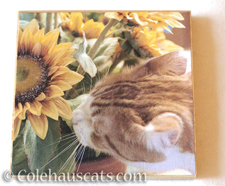 Sunflowers and Quint photo board - © Colehauscats.com