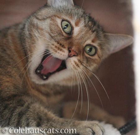 MOL! - © Colehauscats.com