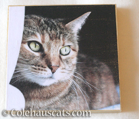 Ruby Roo photo board - © Colehauscats.com