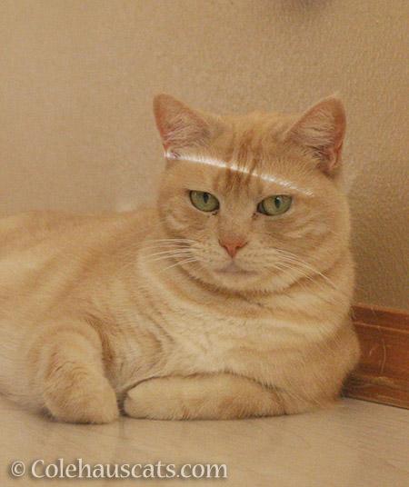 I am NOT Miss StripeyHead Newton - © Colehauscats.com