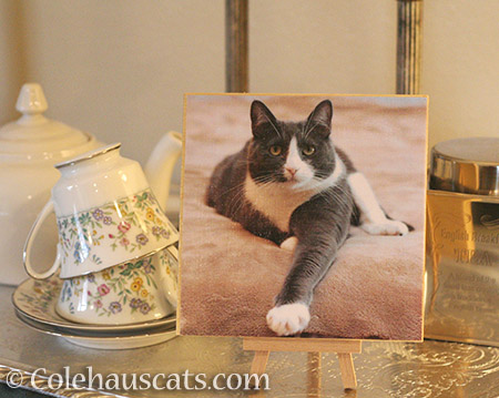 Tessa's Photo Board - © Colehauscats.com