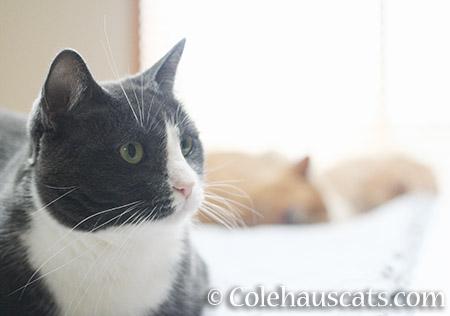 Tessa, Sunny, and Miss Newton - © Colehauscats.com