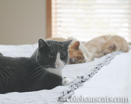 Tessa with Sunny and Miss Newton - © Colehauscats.com