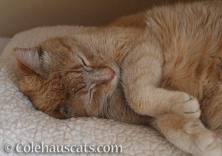 A well deserved nap - © Colehauscats.com