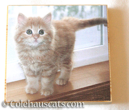 A Wee Pia Bean photo board - © Colehauscats.com