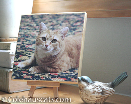 Zuzu's Photo Board - © Colehauscats.com