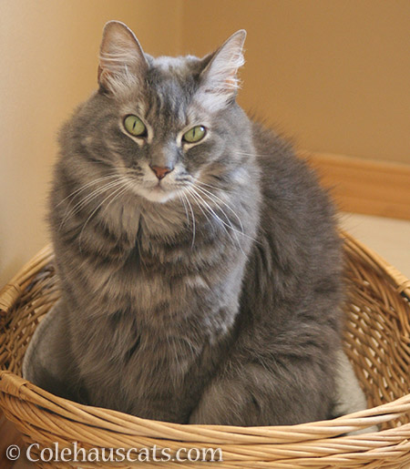 Angel Cameron and his basket - © Colehauscats.com