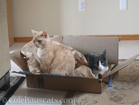 Miss Newton and Tessa - © Colehauscats.com