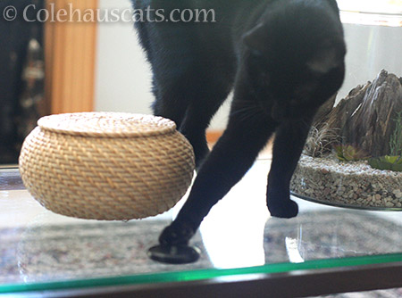 ... it slides across the glass - © Colehauscats.com