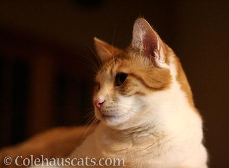 Quint - © Colehauscats.com