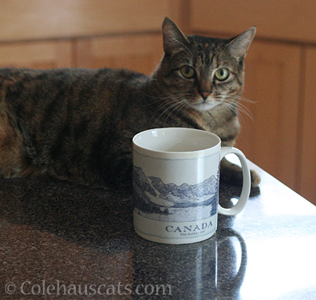 Viola with Dad's favorite coffee mug - © Colehauscats.com