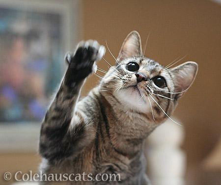 Hey! - © Colehauscats.com