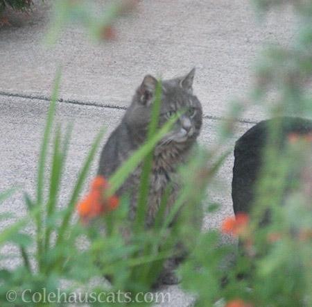 Visiting feral boy Mac - © Colehauscats.com